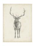 Elk Study Prints by Ethan Harper