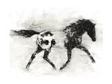 Rustic Appaloosa I Premium Giclee Print by Ethan Harper