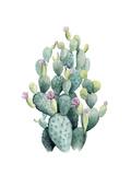 Desert Blooms I Premium Giclee Print by Grace Popp