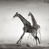 Giraffes on the Run (Artistic Processing) Photographic Print by Johan Swanepoel