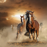Two Wild Chestnut Horses Running Together in Dust, Front View Fotoprint van  mariait