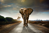 Single Elephant Walking in a Road with the Sun from Behind Photographic Print by Carlos Caetano