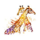 Giraffe Watercolor Illustration with Splash Textured Background. Láminas por Faenkova Elena