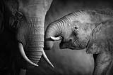 Elephants Showing Affection (Artistic Processing) Fotoprint van Johan Swanepoel