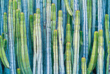 DETAIL VIEW OF THE CARDON CACTUS IN SUMMER WITH RICH BLUE GREEN AND TORQOUISE COLORS Photographic Print by ED Reardon