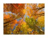 Autumn Spendour Posters by Michael Hudson