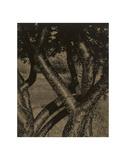 Dancing Trees, 1922 Kunstdrucke von Alfred Stieglitz
