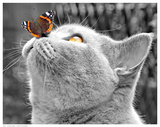 Butterfly on Nose Pôsters