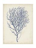 Indigo Coral VI Prints by Vision Studio
