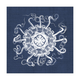 Sea Anemone on Indigo I Prints by Vision Studio