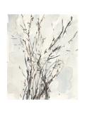 Watercolor Branches I Premium Giclee Print by Samuel Dixon