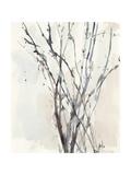 Watercolor Branches II Premium Giclee Print by Samuel Dixon