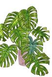Potted Jungle I Poster par Melissa Wang