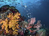 Coral reef with schools of fish, Raja Ampat, Indonesia Photographic Print by  Stocktrek Images