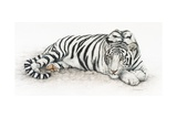 Siberian Tiger Prints by Jan Henderson