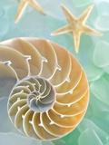 Seaglass 2 Fotografie-Druck von Alan Blaustein
