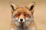 Zen Fox Red Portrait Kunstdrucke von Roeselien Raimond