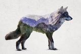 Rocky Mountain Grey Wolf Poster van  Davies Babies