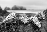 Crescent Beach Shells 3 Reproduction photographique par Alan Blaustein