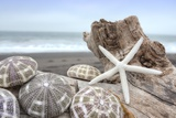 Crescent Beach Shells 5 Reproduction photographique par Alan Blaustein