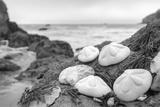 Crescent Beach Shells 4 Reproduction photographique par Alan Blaustein