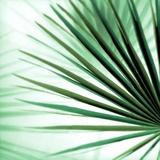 Palm Leaf 1 Reproduction photographique par Alan Blaustein