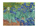 Iris, 1889 Stampe di Vincent van Gogh