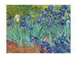 Lirios, 1889 Láminas por Vincent van Gogh