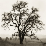 Country Oak Tree Reproduction photographique par Alan Blaustein