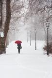 Winter Rose Reproduction photographique par Stefano Corso