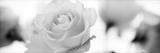 Florison 102 Fotografie-Druck von Alan Blaustein