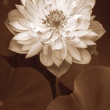 Lotus Welcome Photographic Print by Rebecca Swanson