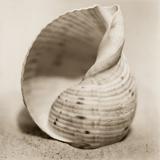La Playa No4 Reproduction photographique par Alan Blaustein