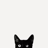 Nieuwsgierigheid, poster van kat met daarbij tekst: Curiosity Fotoprint van Jon Bertelli