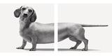 Heads and Tails Fotografisk trykk av Jon Bertelli