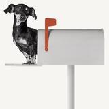 You've Got Mail Reproduction photographique par Jon Bertelli