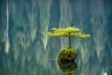Fairy Lake Bonsai Photographic Print by Tim Oldford