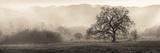Meadow Oak Tree Reproduction photographique Premium par Alan Blaustein