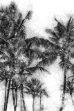 Dorado Palms 1 Photographic Print by Golie Miamee