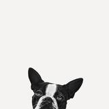 Lojalitet Fotografisk trykk av Jon Bertelli