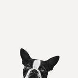 Lealdade Impressão fotográfica por Jon Bertelli