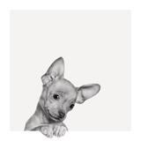 Sweet Chihuahua Fotografisk trykk av Jon Bertelli