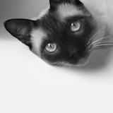 Hey! Photographic Print by Jon Bertelli