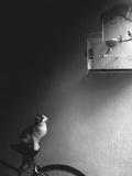 Patience Fotografisk trykk av Jon Bertelli