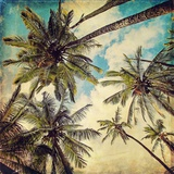 Kauai Island Palms Fotografisk trykk av Melanie Alexandra Price