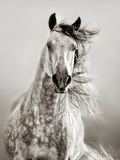 Caballo de Andaluz Fotografie-Druck von Lisa Dearing