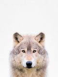 Wolf Fotografisk tryk af  Tai Prints