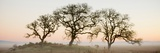 Oak Tree 30 Photographic Print by Alan Blaustein