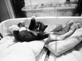 Kitten Laundry Reproduction photographique par Kim Levin