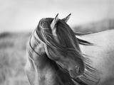 Wilde Anmut Fotografie-Druck von Tony Stromberg